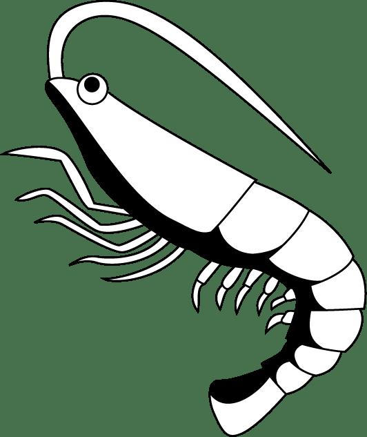 Shrimp black and white clipart 1 » Clipart Portal.