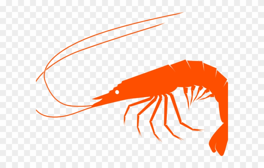 Shrimp Clipart Small Shrimp.