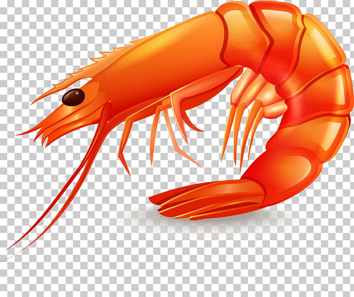 Shrimp Seafood Icon, Delicious prawn design material, red.