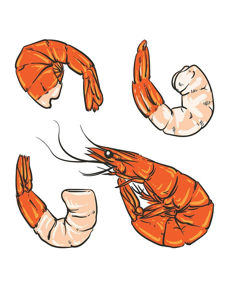 Seafood cocktail drawing. Shrimp for a party or dinner. Hand.