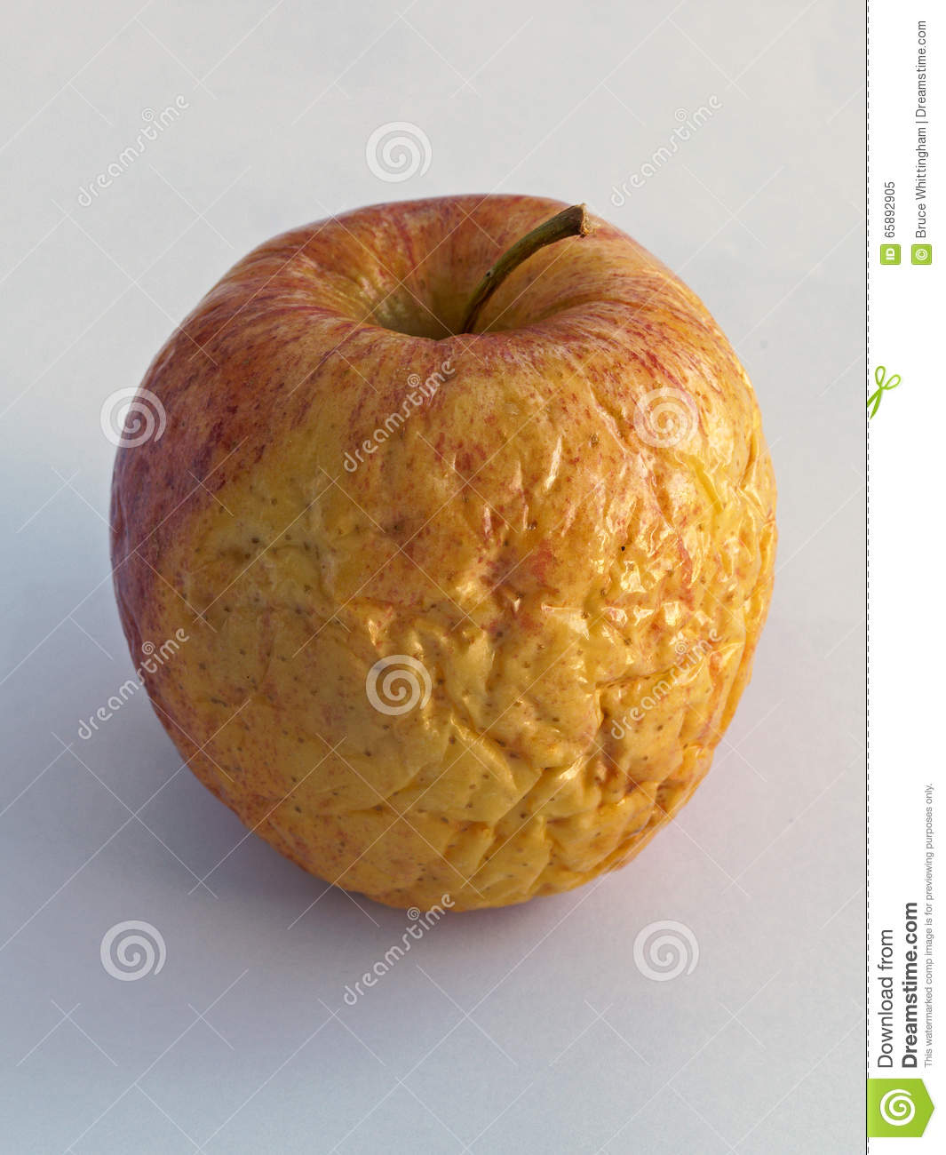 Shriveled Apple Stock Photo.