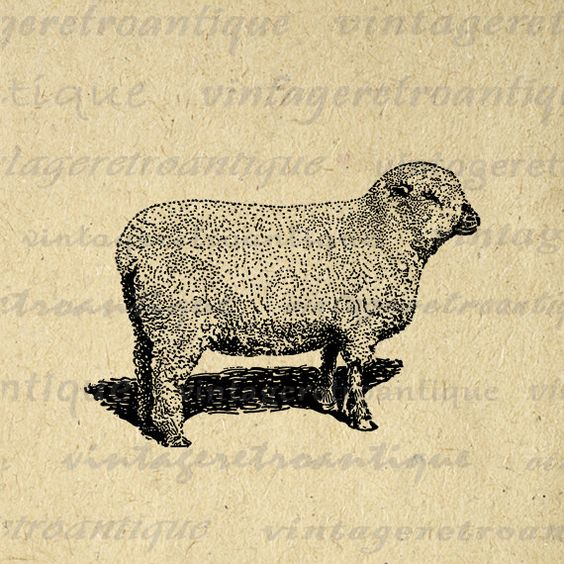 Printable Image Shropshire Sheep Download Graphic Digital Vintage.