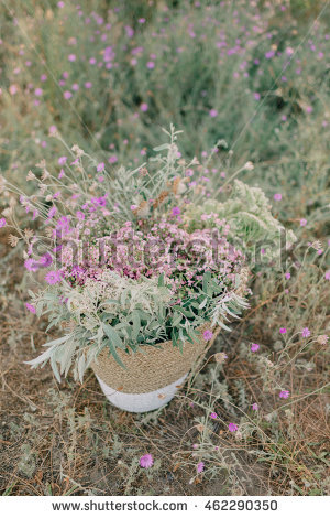 "immortelle_flowers"" Stock Photos, Royalty."
