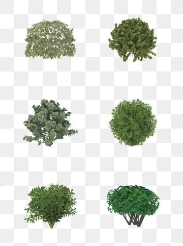 Shrub Png, Vectors, PSD, and Clipart for Free Download.