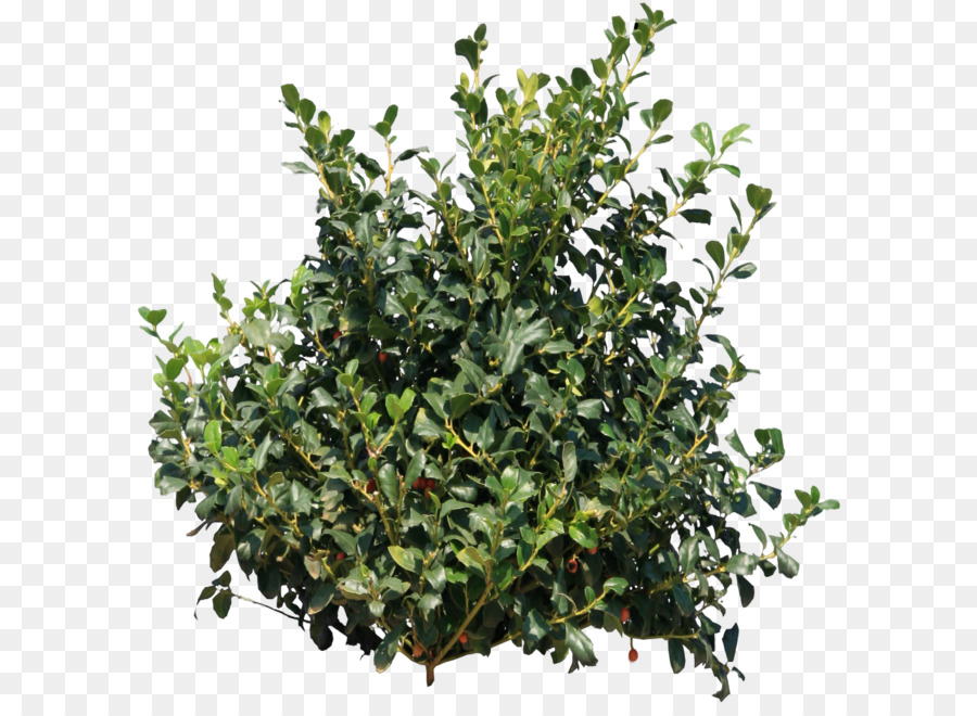 Shrub Png & Free Shrub.png Transparent Images #15530.