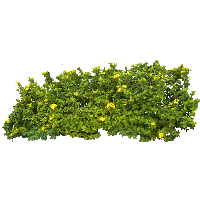 Download Bush Free PNG photo images and clipart.