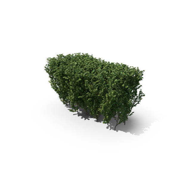 Boxwood Shrub PNG Images & PSDs for Download.