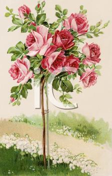 Rose Bush Clipart.