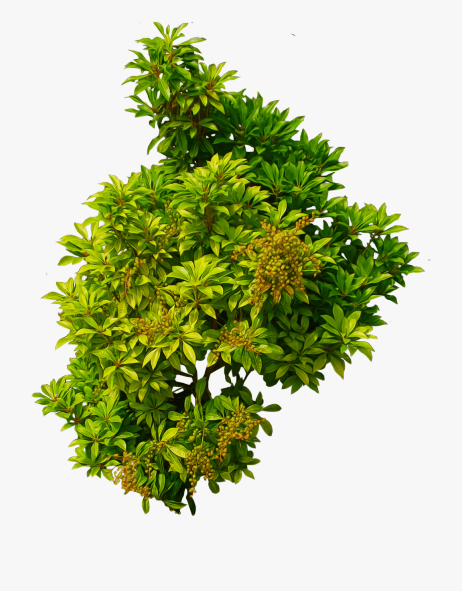Shrub, Bushes Png Transparent Images.