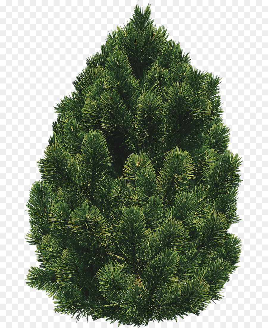 Shrub Tree Clip art.