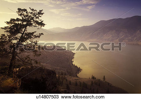 Stock Photo of Rocky Mountain Juniper at sunset over Kamloops Lake.