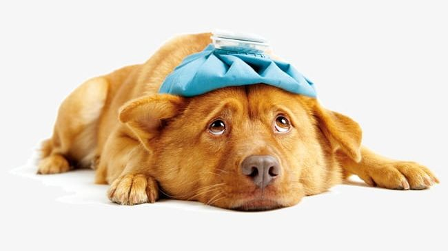 Sick Dog PNG, Clipart, Advertising, Animal, Brown, Canine.