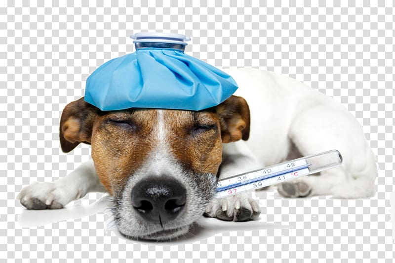 Sick dog transparent background PNG clipart.