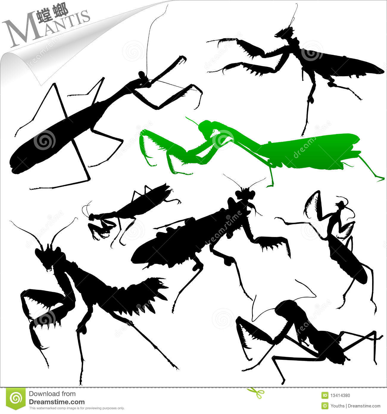 Vector Insect.
