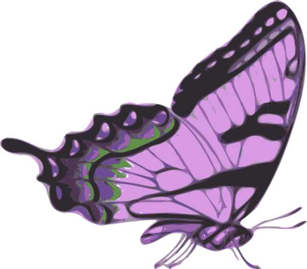 Side Of Butterfly Clipart.