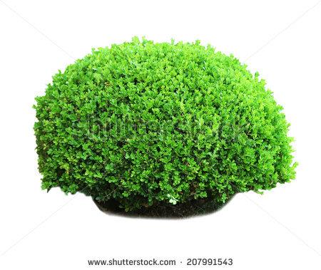 Rectangular Boxwood Shrubs Green Fence Stock Vector 236400430.