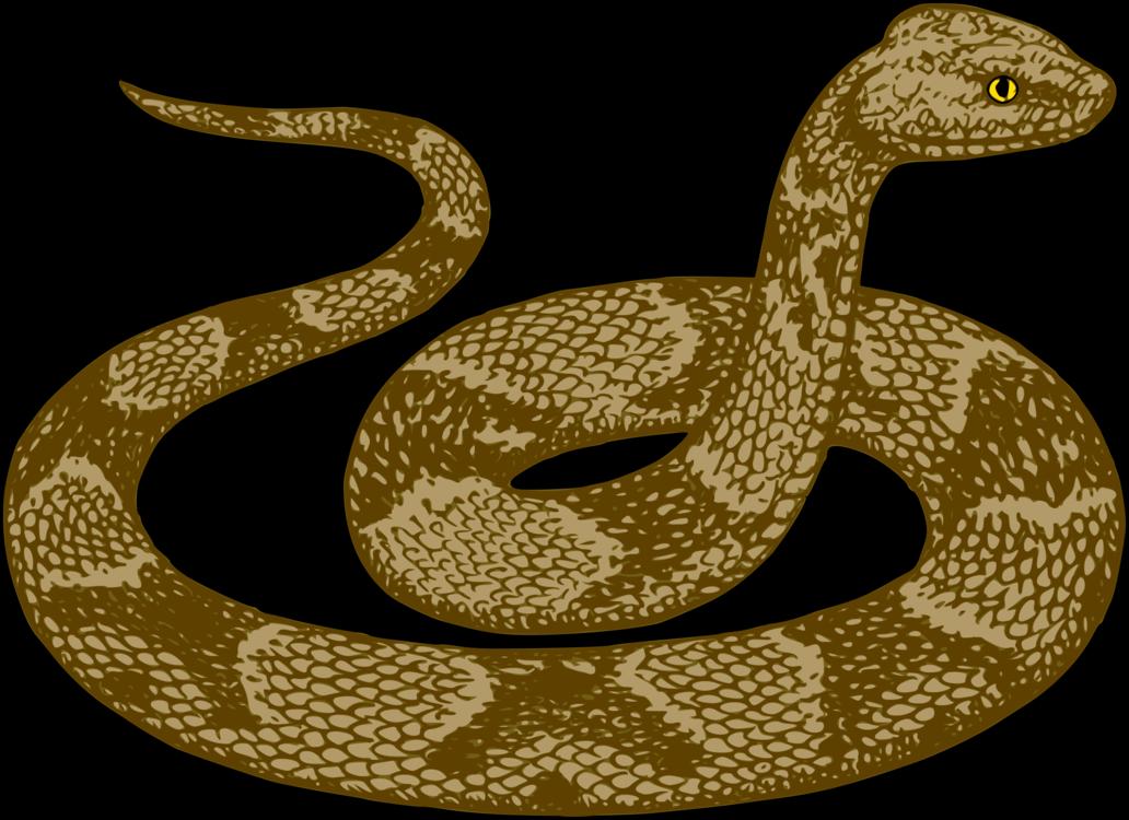 Sidewinder,Elapidae,Reptile PNG Clipart.