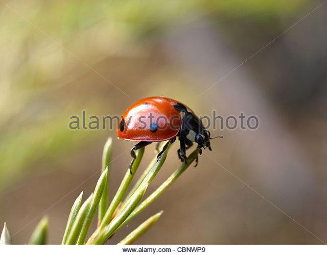 Lady Bug Stock Photos & Lady Bug Stock Images.