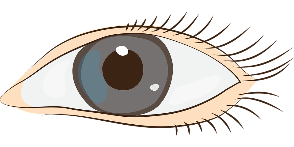 Free vector graphic: Eyes, Sight, Face, Clip Art.