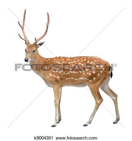 Stock Photography of male sika deer k9004351.