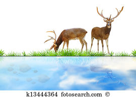 Sika Illustrations and Clipart. 12 sika royalty free illustrations.