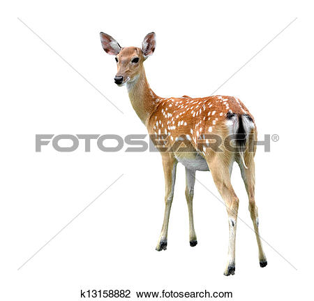 Stock Photo of sika deer k13158882.