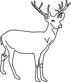 Drawings Of Deer.