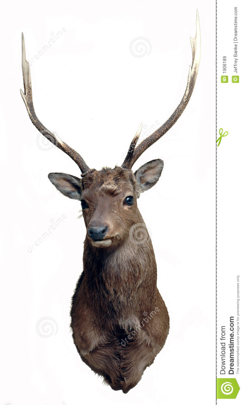 Sika Deer Mount Royalty Free Stock Images.