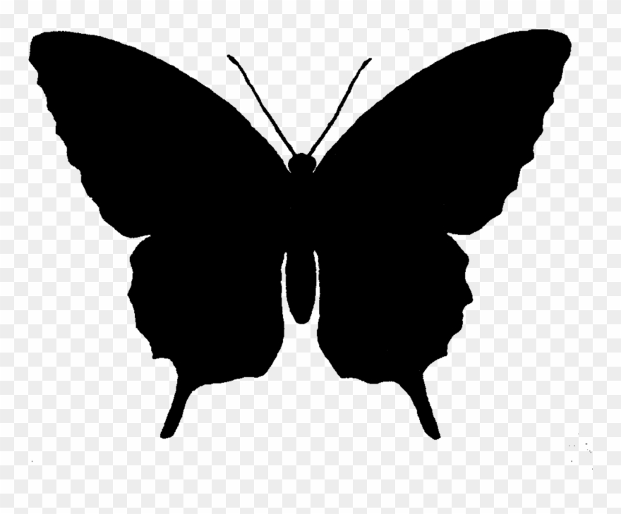 Butterfly Silhouette At Getdrawings Com Free For.