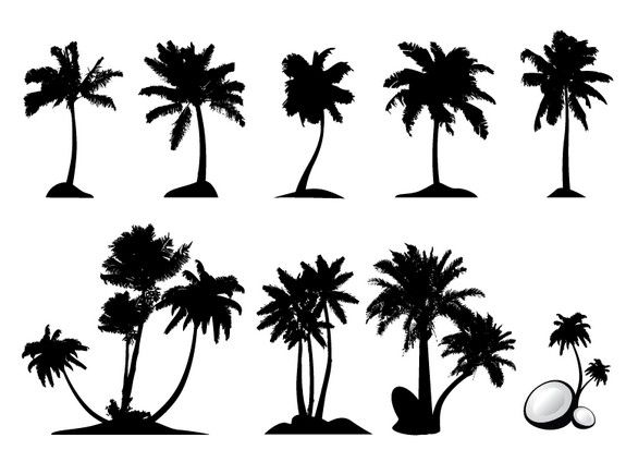 17 Best images about Palm Trees on Pinterest.
