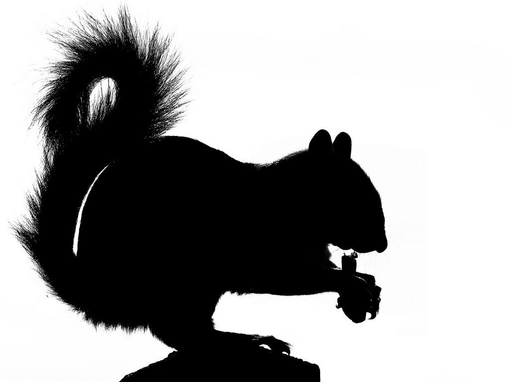 Best Squirrel Silhouette #7582.