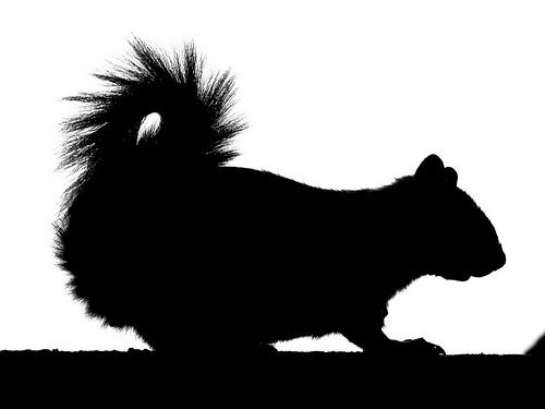 Running squirrel.