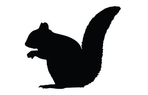 Squirrel silhouette vector.