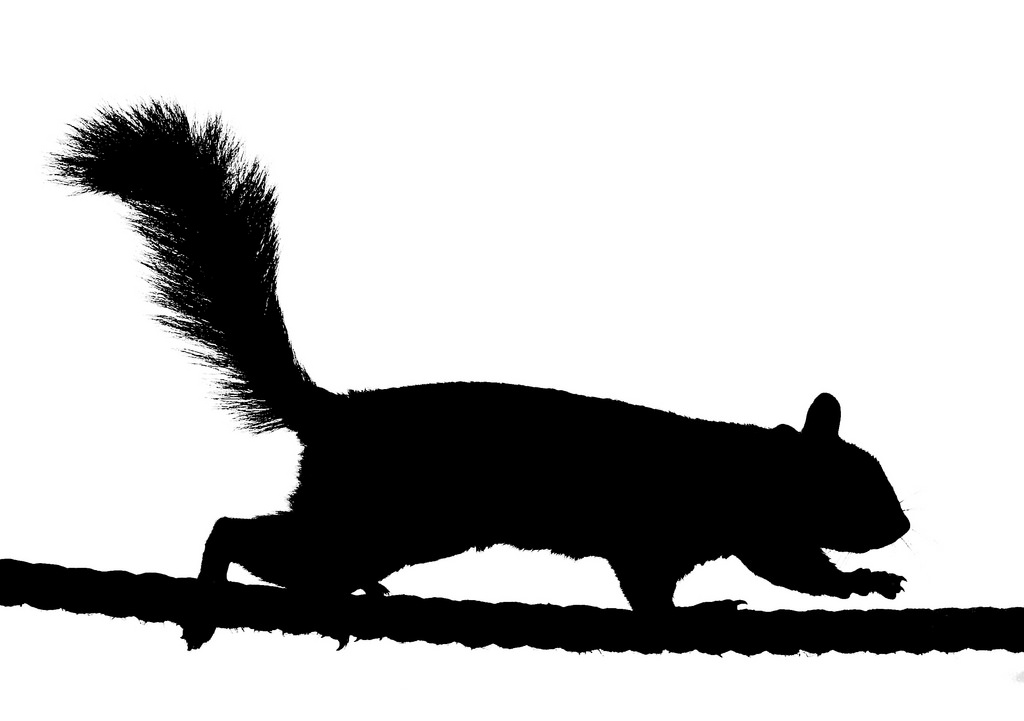 silhouette clipart running squirrel - Clipground