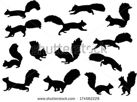 Squirrel Stock Images, Royalty.