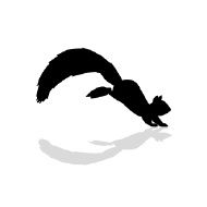 Image result for squirrel silhouette.