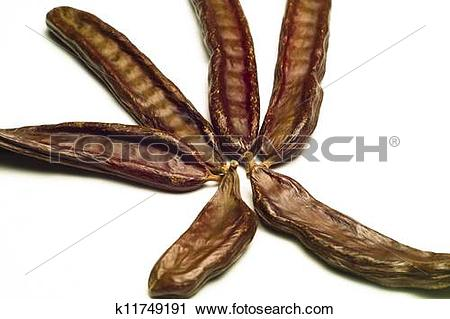 Stock Photography of The Carob (Ceratonia siliqua) k11749191.