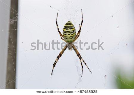 Silk band spider clipart #9