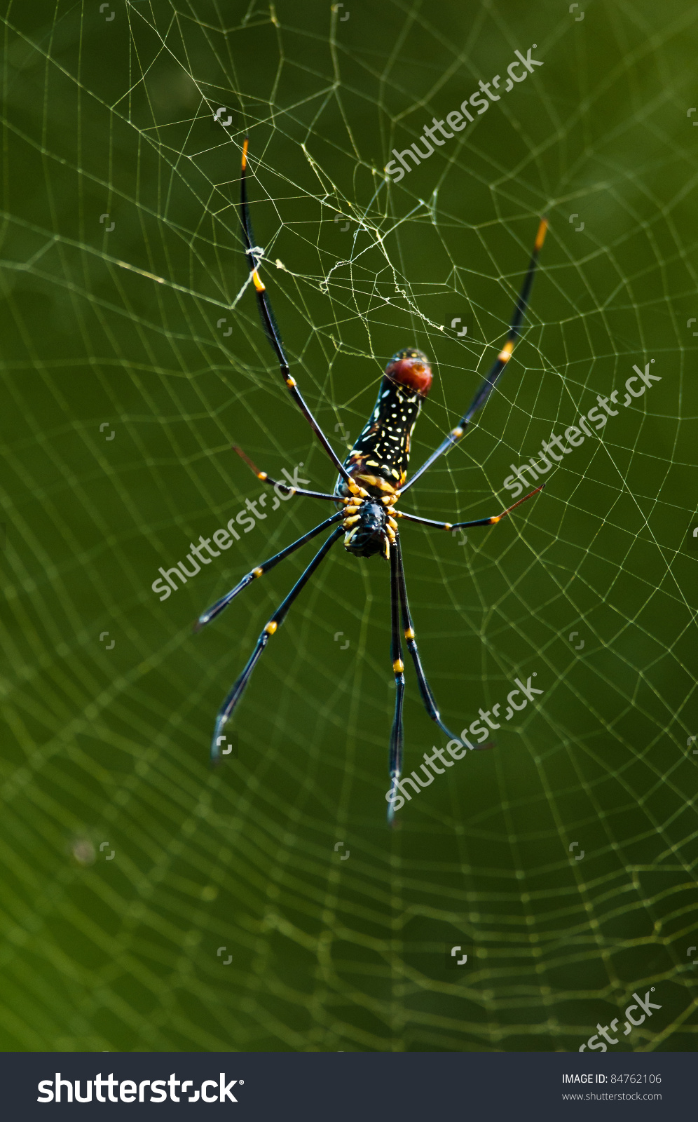 Silk band spider clipart #4