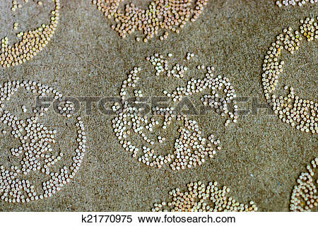 Stock Image of Silk Production Process, Silk worm from egg to worm.