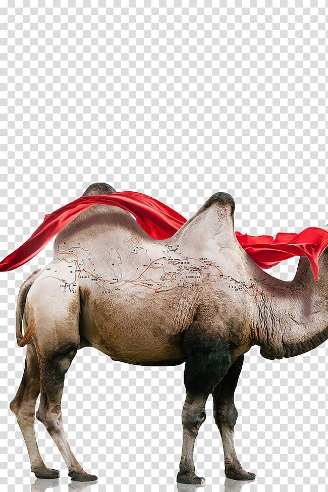One Belt One Road Initiative Maritime Silk Road Camel.