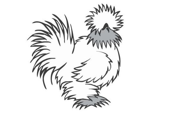 Silkie Decal / Chicken lover / Funny Decal / Farm decal.