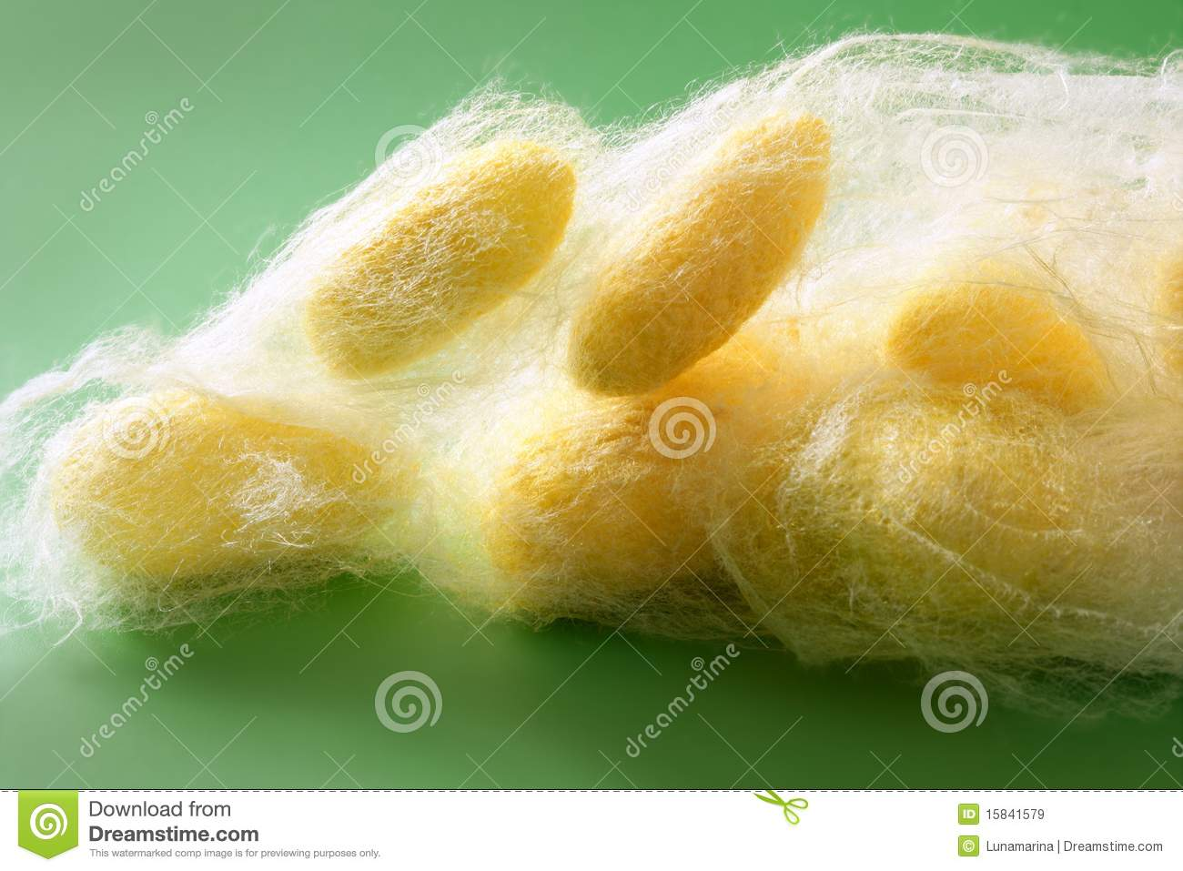 Silkworm Cocoon Many On Silk Worm Net Royalty Free Stock Images.