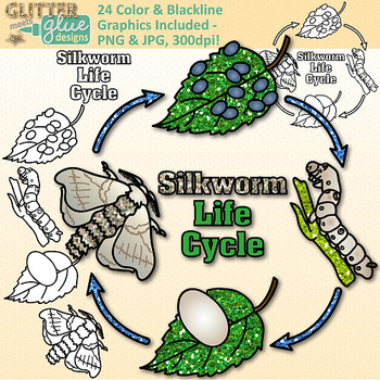 Silkworm Life Cycle Clip Art {Great for Animal Groups, Insect.
