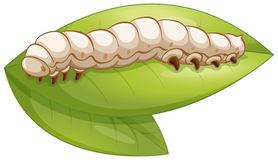 Silkworm Clipart.