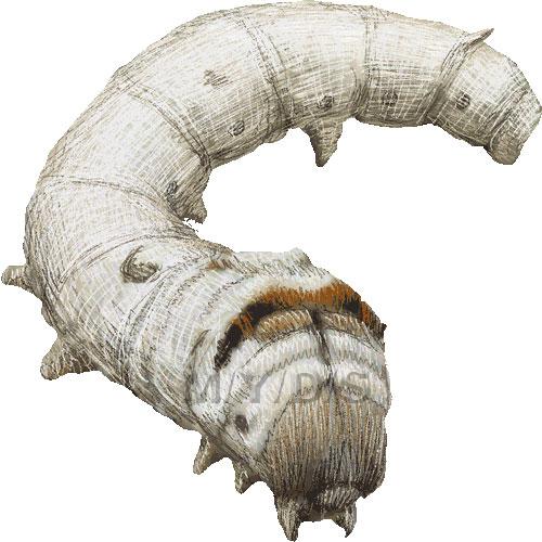Silkworm, Domesticated Silkmoth clipart graphics (Free clip art.