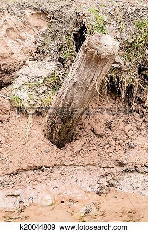 Stock Photograph of Silt eroding along creek k20044809.