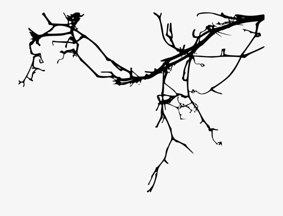 Branch Transparent Simple.