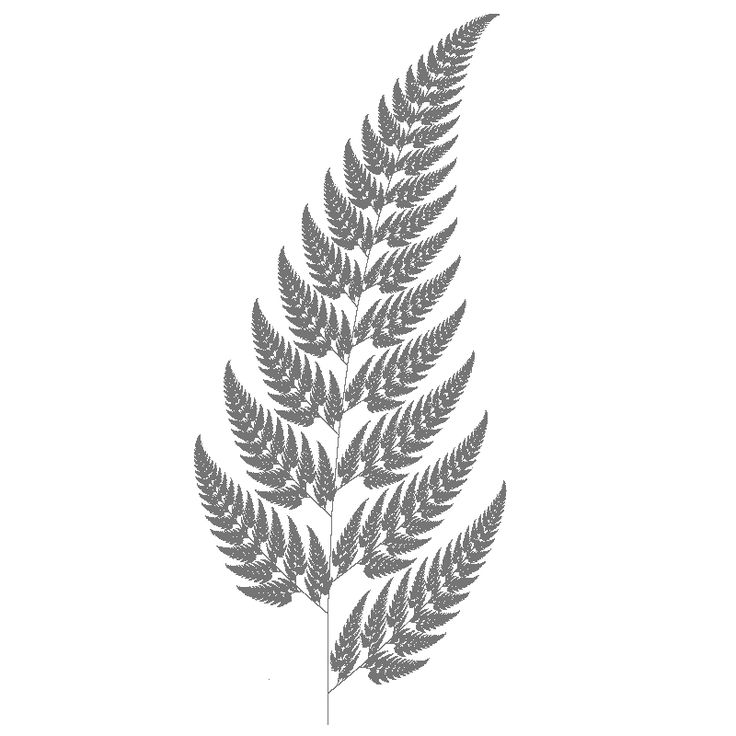 1000+ images about silver fern on Pinterest.