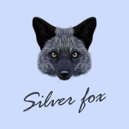Silver fox clipart 4 » Clipart Station.
